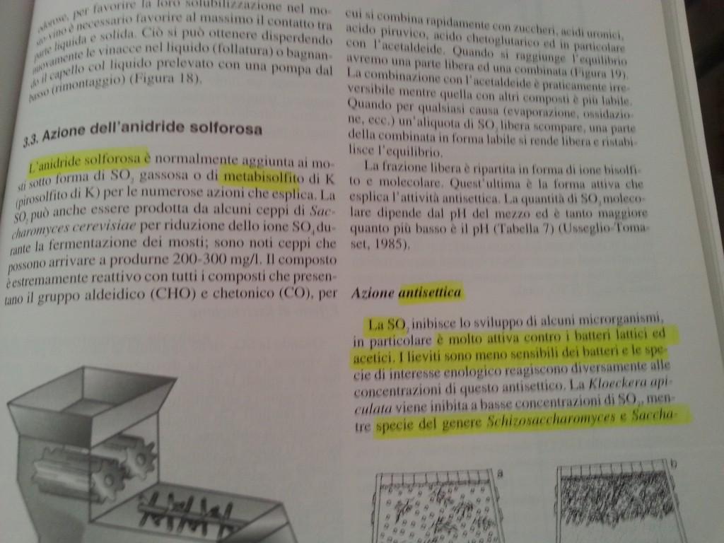 La chimica degli alimenti - Metabisolfito