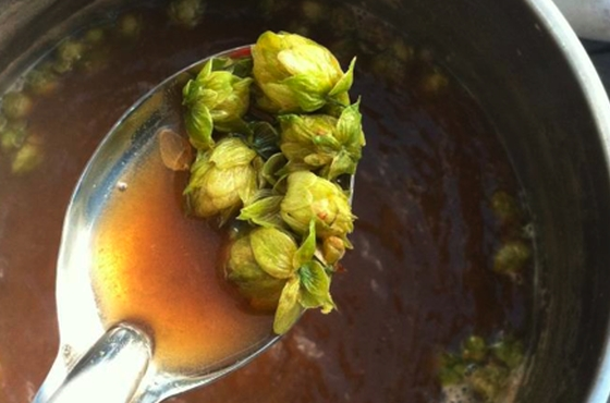 Hop replacement Janish