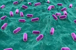 NEWS | Un nuovo sito per i batteri lattici